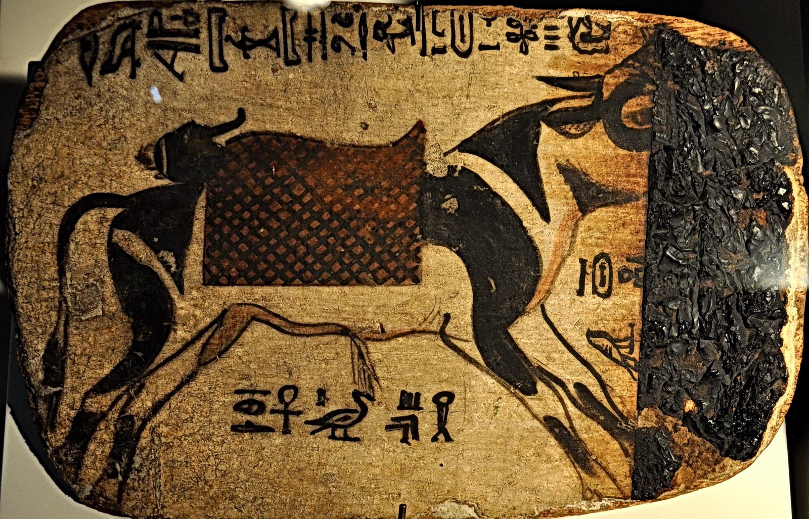 Musée Curtius - taureau Apis